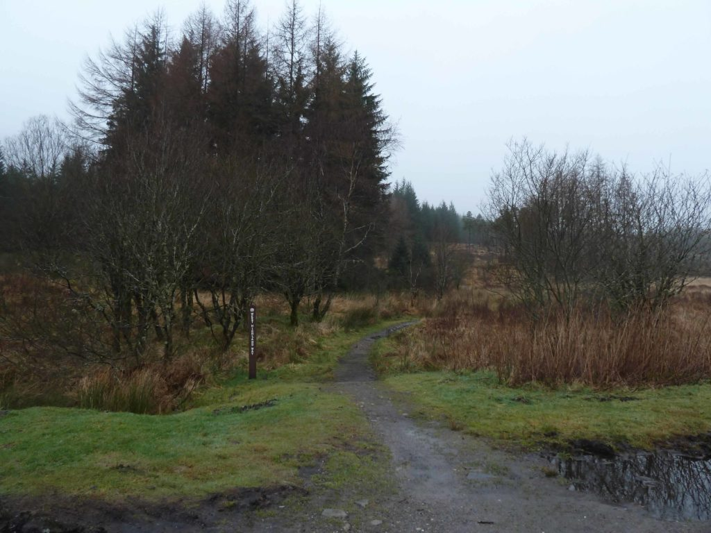 From Bridge of Orchy to Inveroran